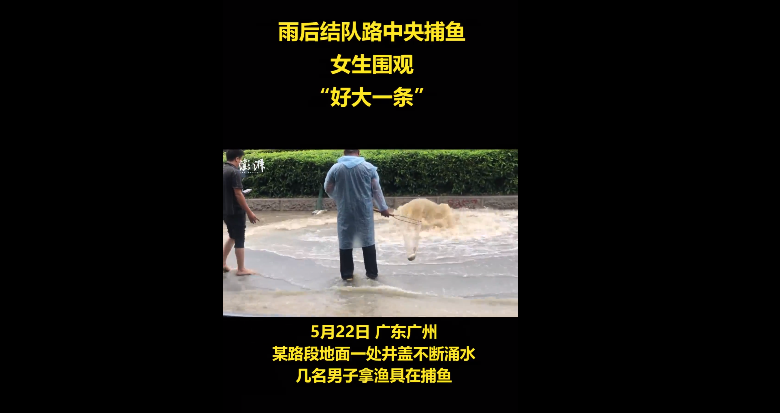 广州雨后路人当街捕鱼什么情况?广州雨后路人当街捕鱼现场画面曝光