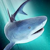 海洋 鲨鱼 危险 水族�