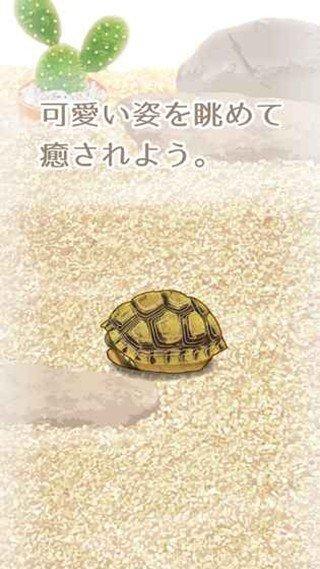 治愈的龟养成软件截图1