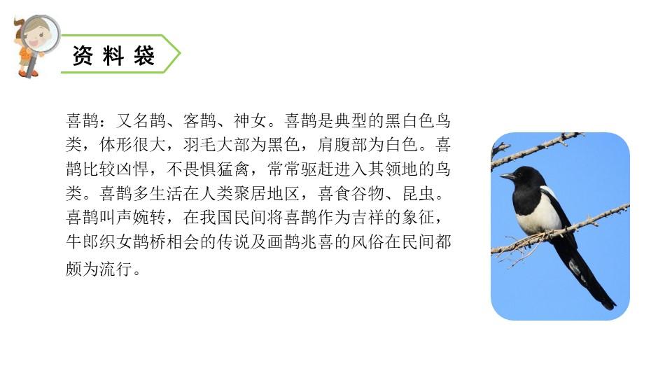 《枫树上的喜鹊》PPT课件下载