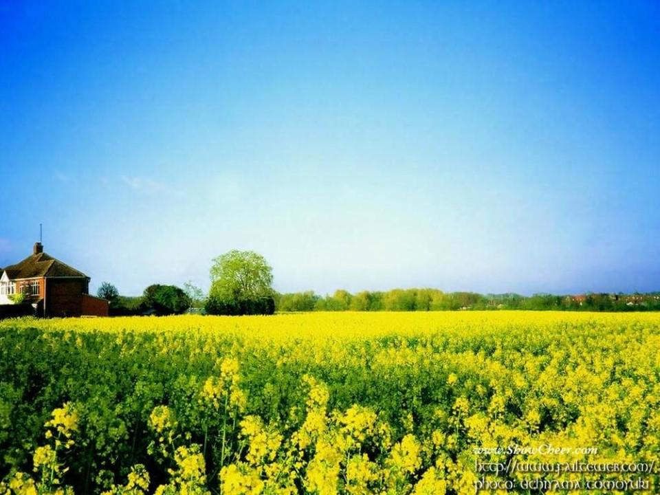 《五月的田野》PPT课件2下载