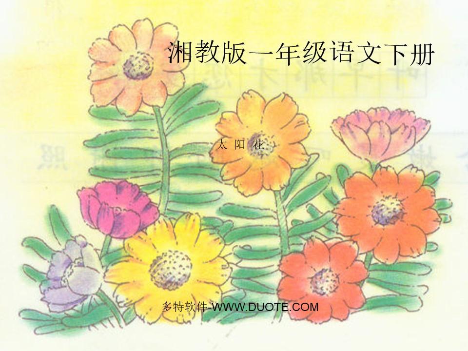 《太阳花》PPT课件下载