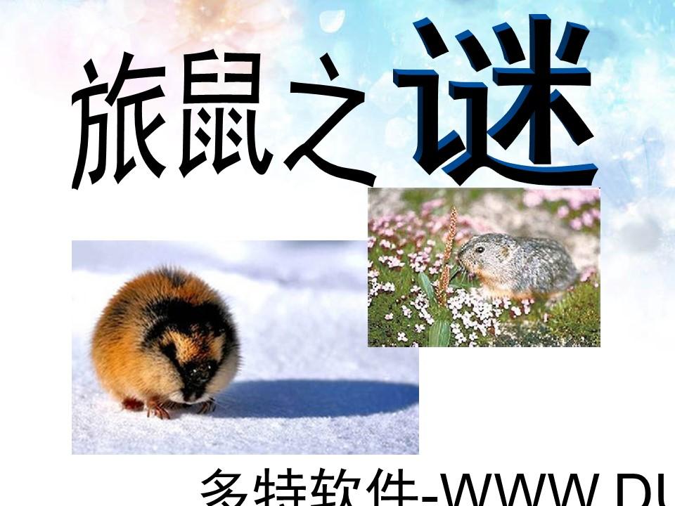 《旅鼠之谜》PPT课件4下载