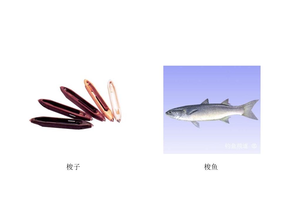 《天鹅、大虾和梭鱼》PPT课件2下载