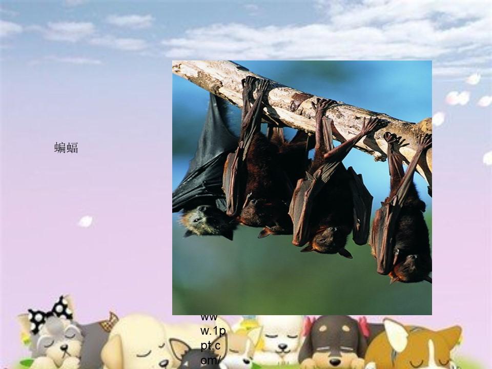 《动物的睡眠》PPT课件下载