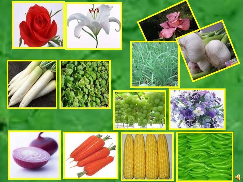 《植物之间的爱和恨》PPT课件下载