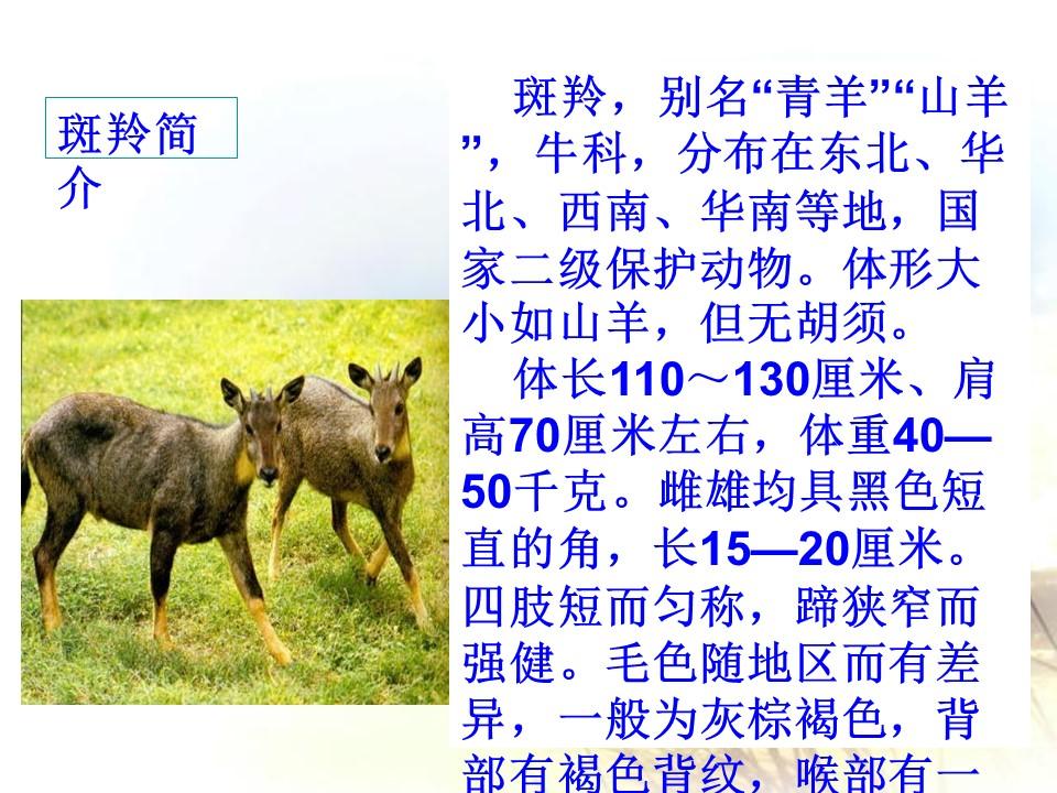 《斑羚飞渡》PPT课件4下载