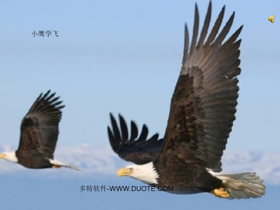 《小鹰学飞》PPT课件下载