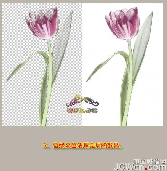 photoshop抠图教程-运用背景橡皮擦抠透明郁金香